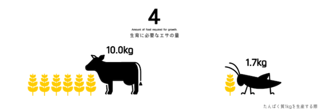 牛とコオロギ餌の量比較