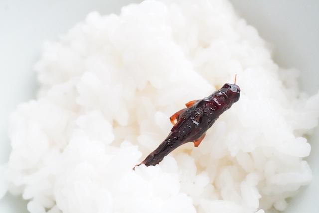 お米の上のイナゴ