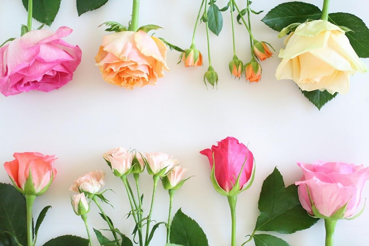 花の定期便をイメージした数種類のカラフルな花