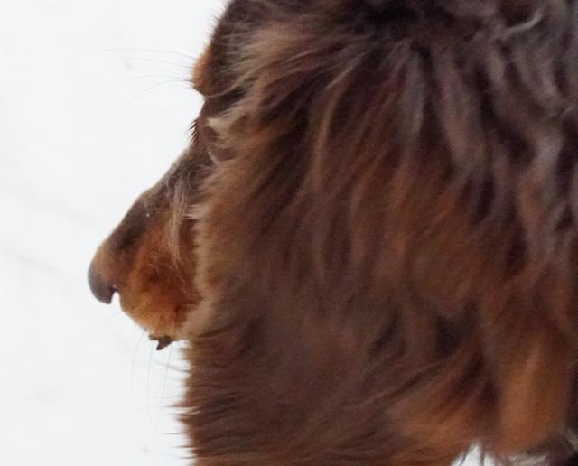 バッタを食べる犬