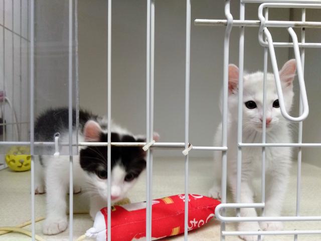 保護猫カフェ東京キャットガーディアン